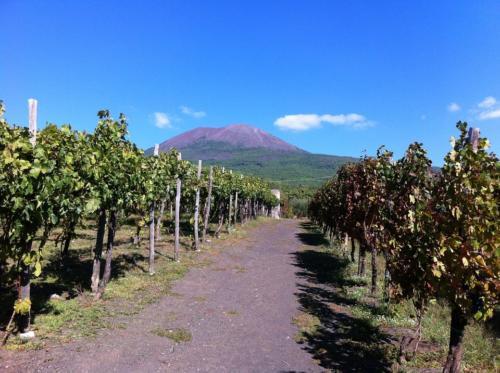 pompeii e wine tour
